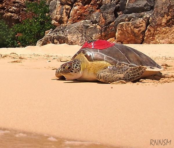 Esperanza Turtle release in Cabo